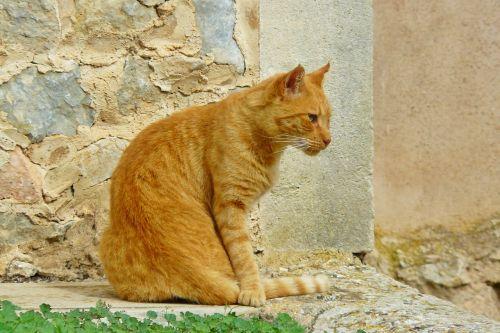 cat animal pet