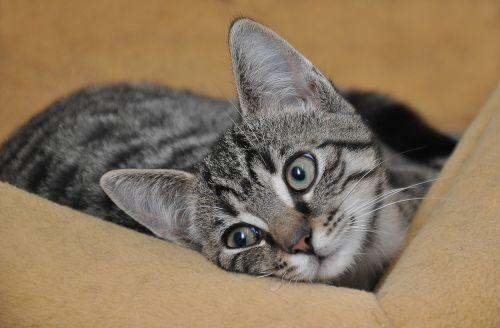 cat baby cat young cat