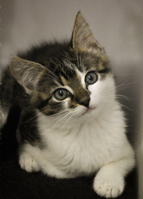 cat baby cat animal shelter