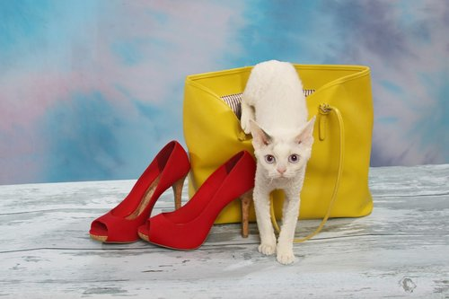 cat crawling out of purse  cat  yellow purse