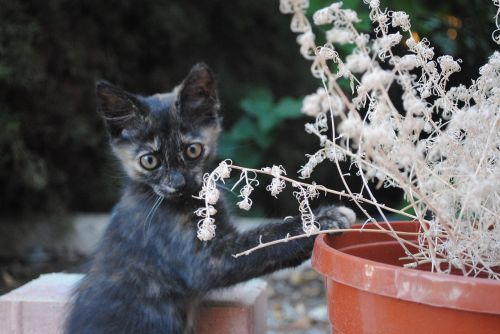 cat doing gardening kitten gardening fun kitten