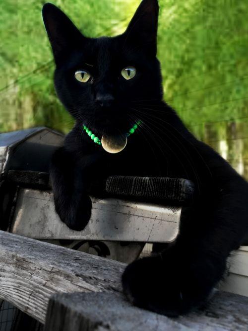 cat domestic rescue cute