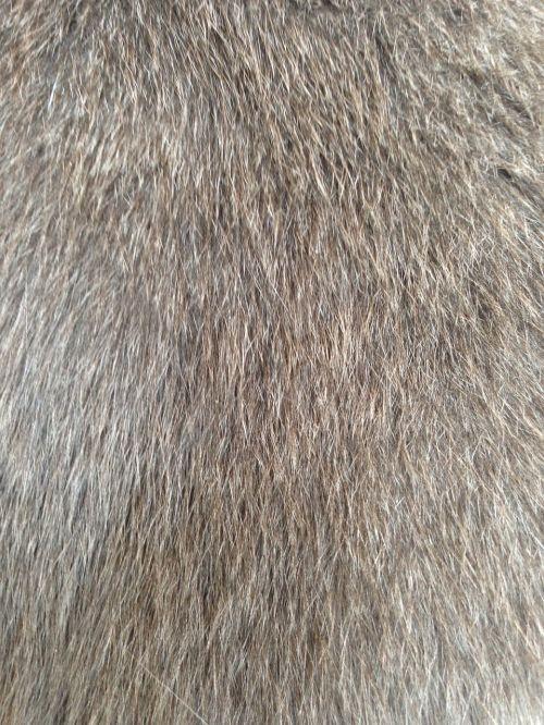 cat fur fur hairy