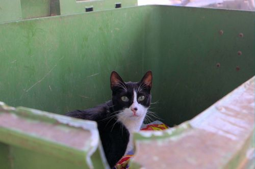 Cat In Rubbish Bin