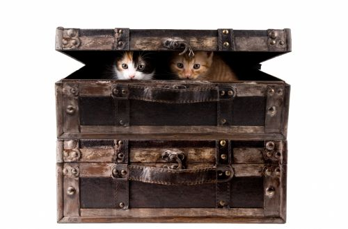 Cat In Suitcase Isolated On Whit