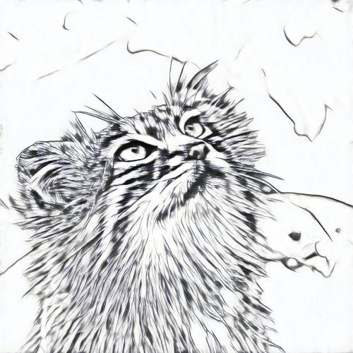 Cat Sketch 1