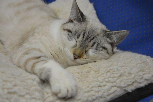 cat sleeping cat sleep lengthen