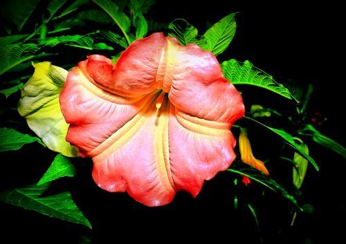 catalpa blossom bloom
