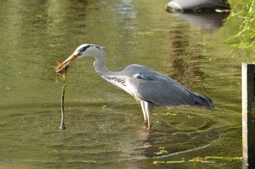 Catch A Fish 9