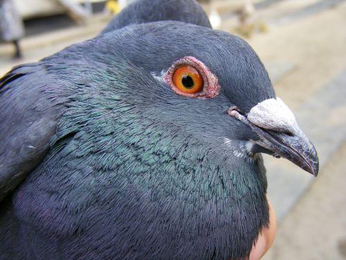 catching dove hand