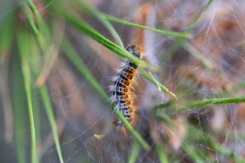 caterpillar nature animal