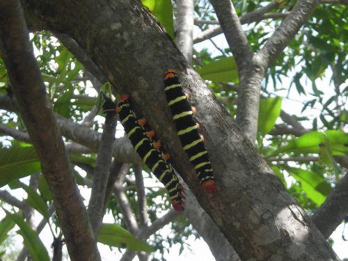caterpillar leaf nature