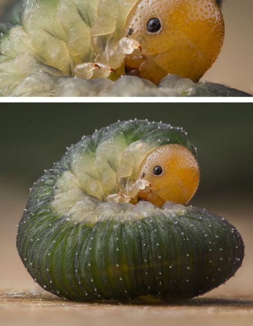 caterpillar cute macro