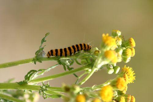 caterpillar jo boonstra groningen
