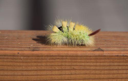 caterpillar green green caterpillar