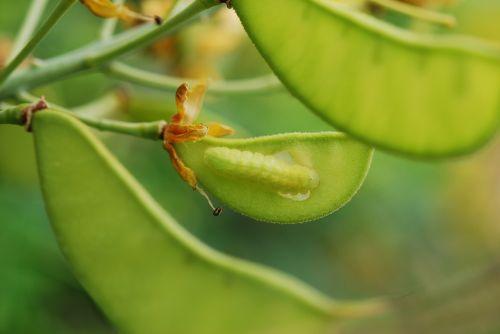 caterpillar worm green