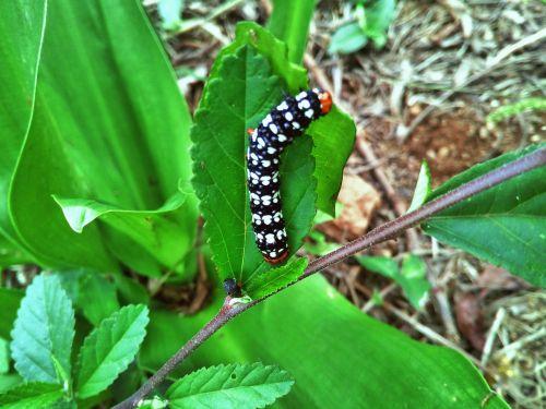 caterpillar nature leaf