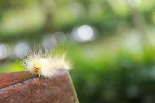 caterpillar animal nature