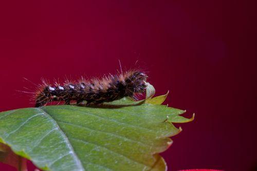 caterpillar eat macro