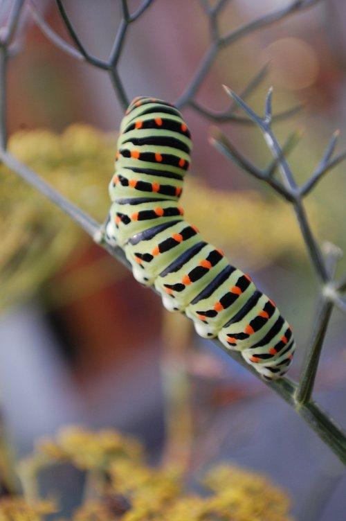 caterpillar  interesting  outdoors