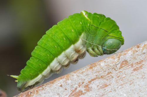 caterpillar nature wildlife