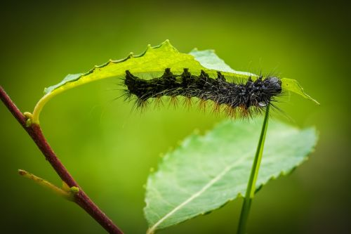 caterpillar larva animal