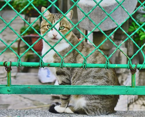 cats fence pet