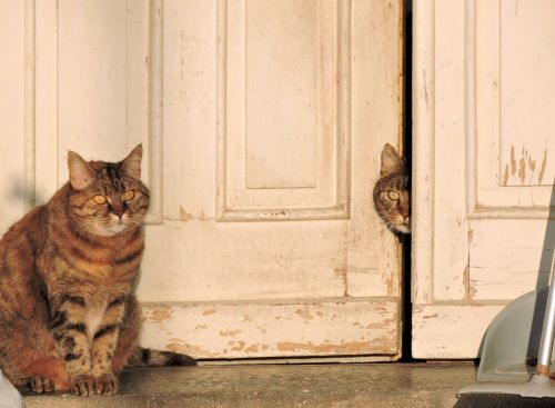 cats portrait pets