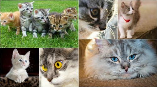 cats kittens collage