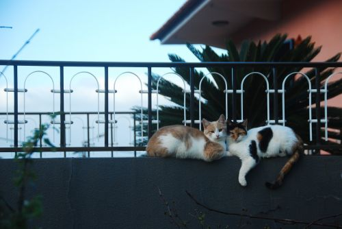 cats love fence