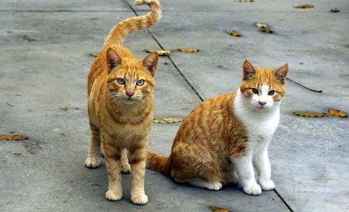 cats animals pet