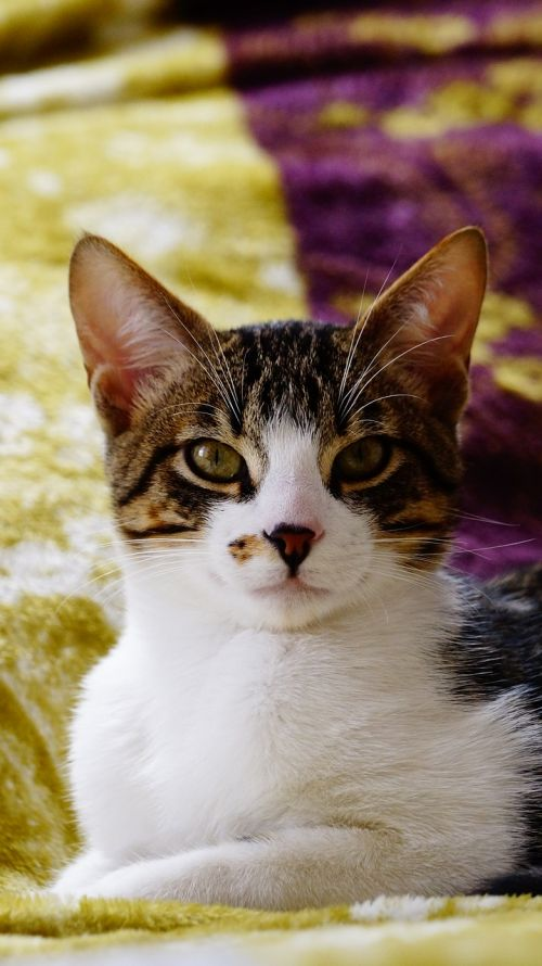 cats kittens feline look