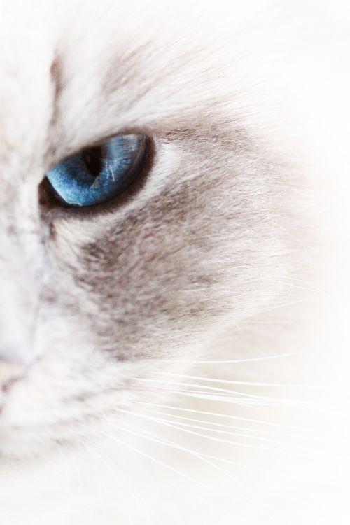 cats pet white