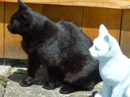 cats cat black