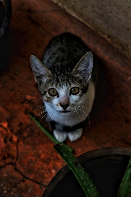 cats  cute  bold