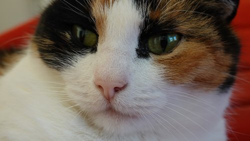 cats  portrait  close up