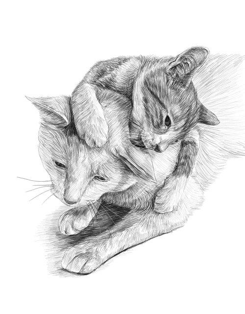 cats  artwork  pencil drawing
