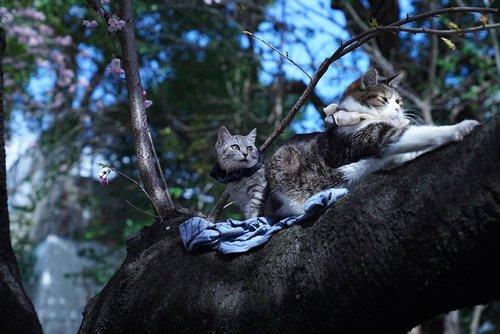 cats  sunning  tree branch