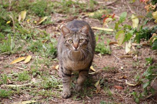 cats  felines  tabby