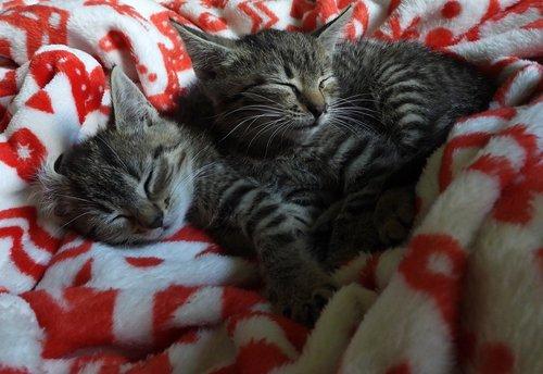 cats  xcode  dachowce