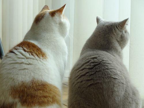 katės,Draugystė,saugokis