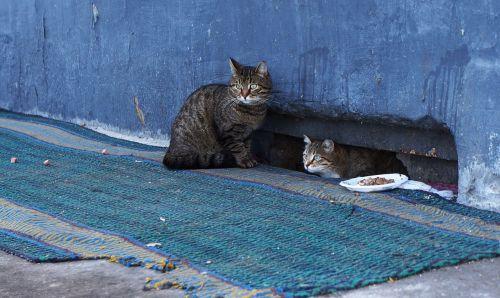 cats cat pet