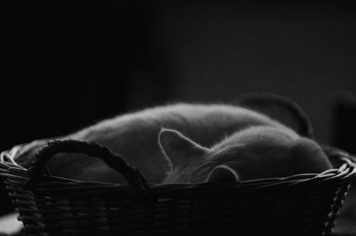 cats-basket sleeping rest