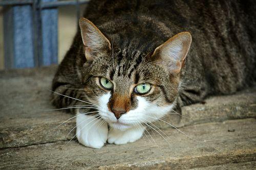 cat's eyes animal shelter mieze