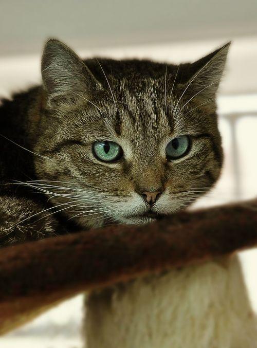 cat's eyes animal pet