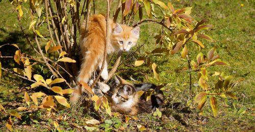 cats guys cat kitten