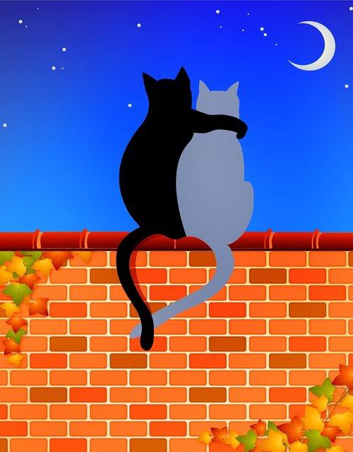 cats on brick wall  cat lovers  moon