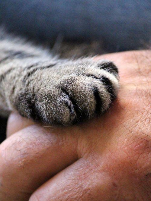cat's paw hand cat