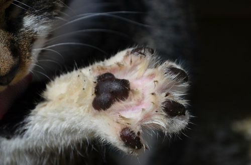 cat's paw paw print paw