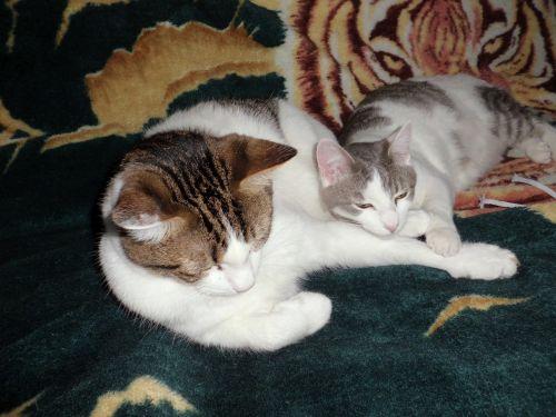 cats sleeping cuddle cuddling